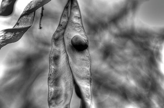 The Pod by Jeffrey Platt