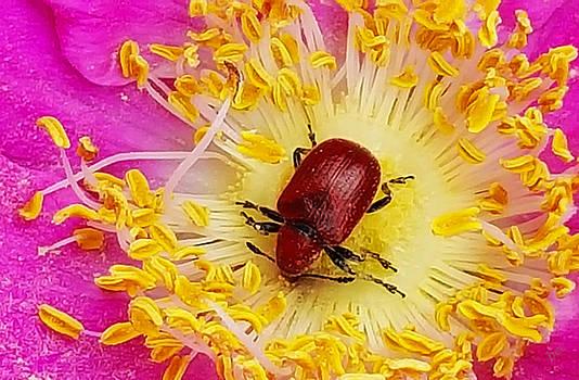 The Pollenator by Bruce Carpenter
