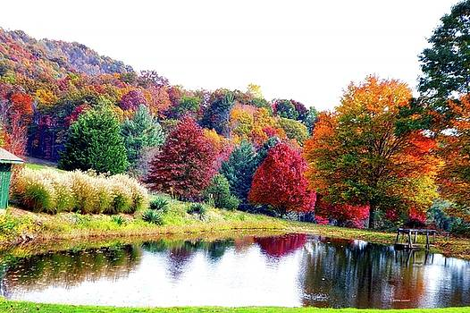 The pond by Dennis Baswell