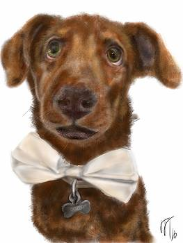 The Pooch with the bow tie  by Lois Ivancin Tavaf