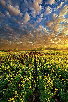 The Possibilities Are Many by Phil Koch