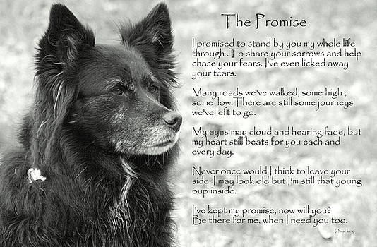 The Promise by Sue Long