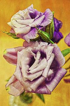 The Purple Rose by Sandi OReilly