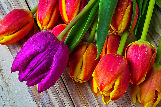 The Purple Tulip by Garry Gay