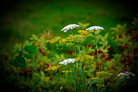 The Queen's Lace by Nora Blansett