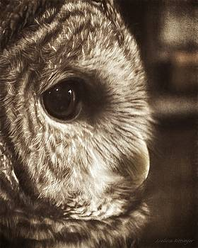The Quiet One, Barred Owl Low Color Sepia by Melissa Bittinger