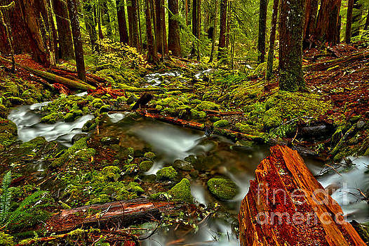 The Rainforest Cycle by Adam Jewell