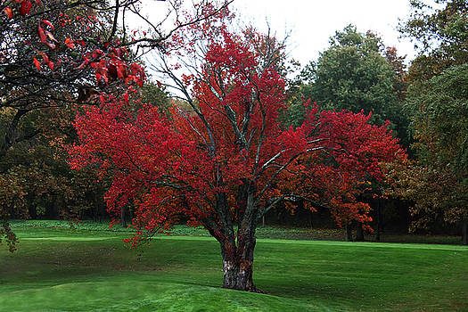 The Red Tree by Jeff Breiman
