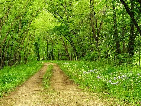 The Road Less Traveled  by Lori Frisch