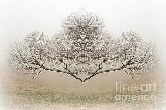 The Rorschach Tree by Jim Cook