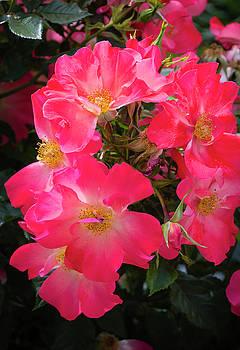 The Rose Garden by Dennis Reagan