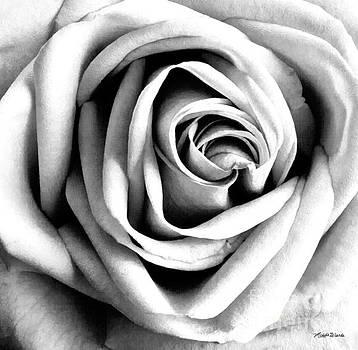 Michelle Wiarda - The Rose