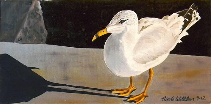 The Seagull's Shadow by Nicole Willbur