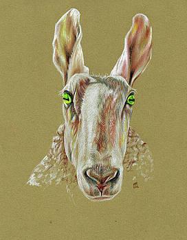 The Sheep by Richard Mountford