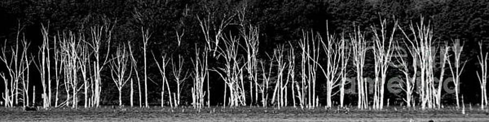 The Silence of Witnesses by Steven Huszar