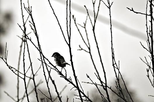 Cindy Nunn - The Sparrow 1