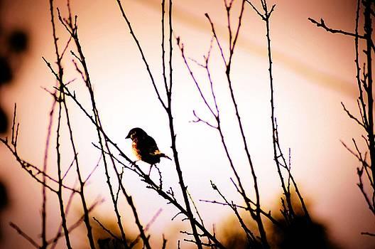 Cindy Nunn - The Sparrow 3