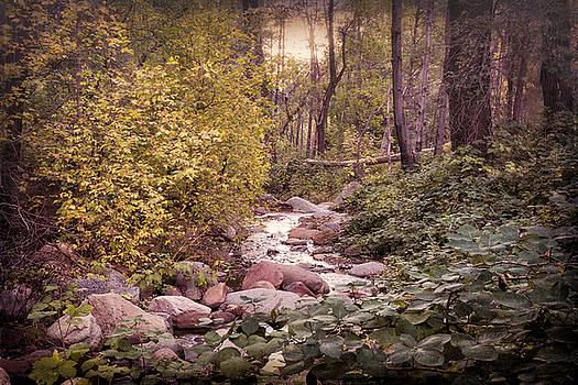 Saija  Lehtonen - The Splendor of Autumn