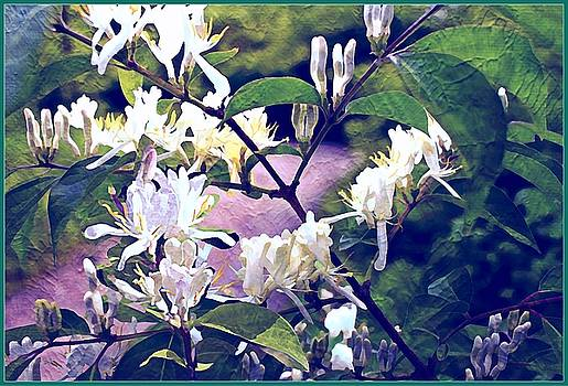 The Spring Honeysuckle by Mindy Newman