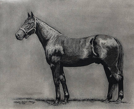 The Standardbred by Thomas Allen Pauly