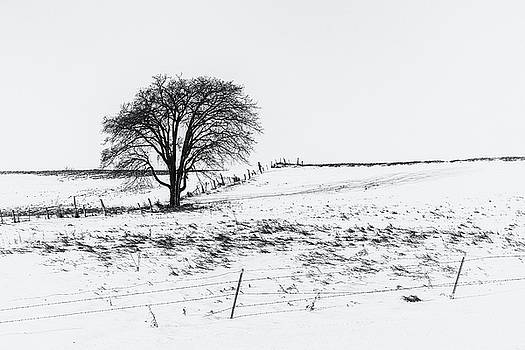 The Starkness of Winter by Penny Meyers