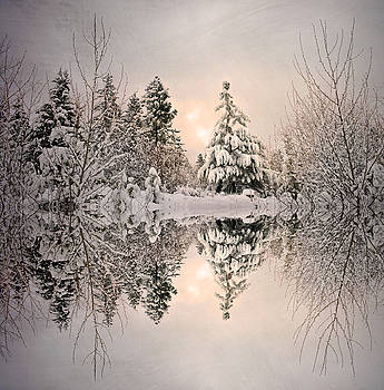 The Still Trees of Winter by Tara Turner