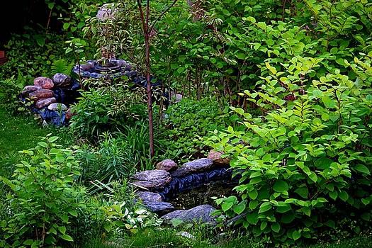 The Stony Pond by Amanda Struz