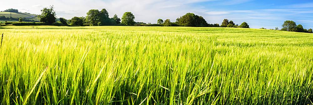The summer crop by Trevor Wintle