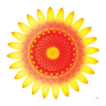 The Sunflower by Rabi Khan