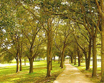 The Sunny Shaded Path by Adele Moscaritolo