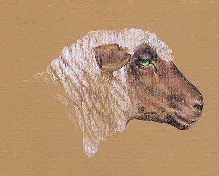 The Surly Sheep by Richard Mountford