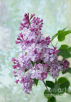 Barbara McMahon - The Sweetness of Lilac