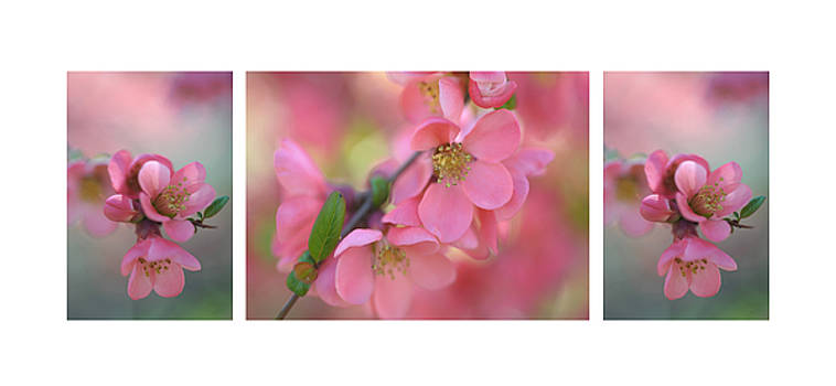 Jenny Rainbow - The Tender Spring Blooms. Triptych