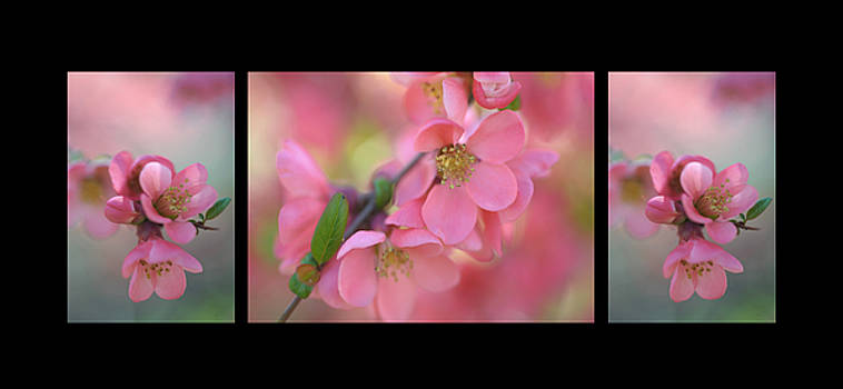 Jenny Rainbow - The Tender Spring Blooms. Triptych on Black