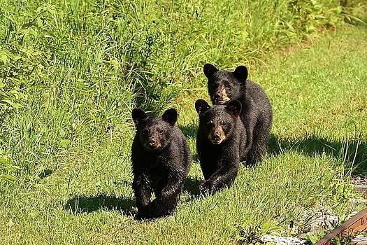 The Three Little Bears by Teresa McGill