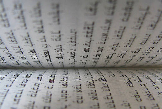 The Torah by Ericamaxine Price