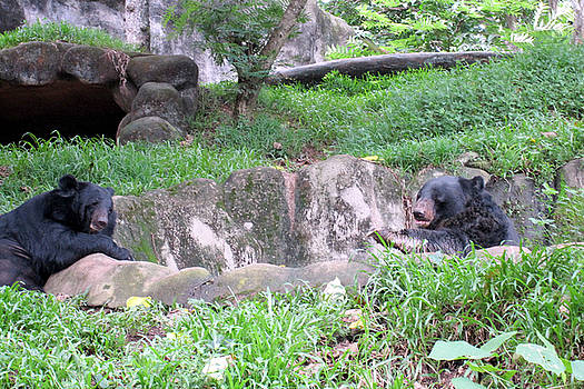 The Two Black Bears by Siddarth Rai