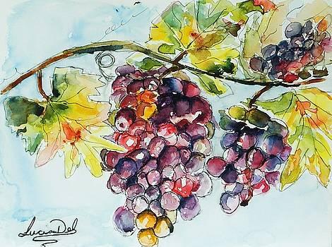 The Vine by Lucia Del