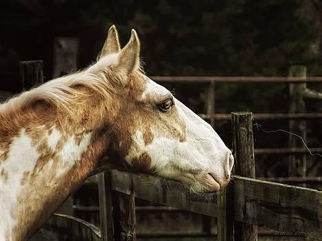 The Wait, Paint Horse Equestrian Art by Melissa Bittinger