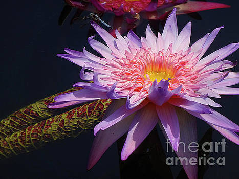 The Water Lily Pond by Cindy Manero
