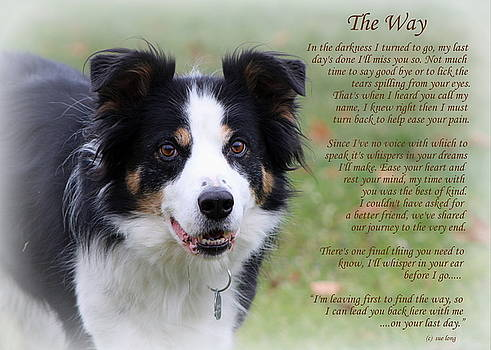 The Way  Border Collie by Sue Long