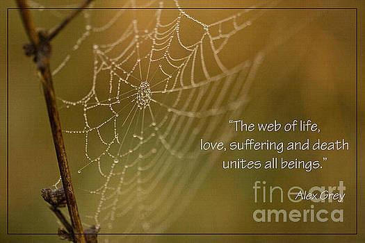 The Web of Life by Liz Alderdice