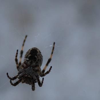 The Webs We Weave by Ramona Whiteaker