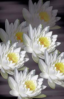 The White Garden by Rosalie Scanlon