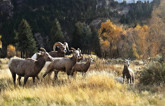 The Whole Ram Family by Susan Kinney