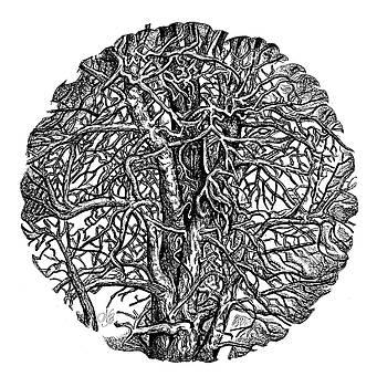Natalie Berman - The Wild Trees
