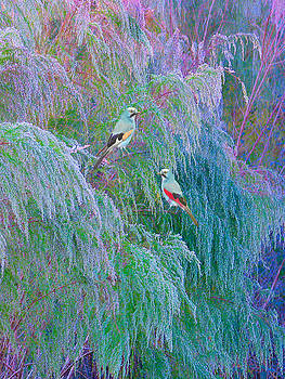 The Willows by Adele Moscaritolo