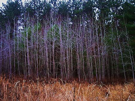 The Woods 3 by Anna Villarreal Garbis