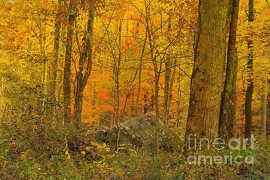 The Woods by Geraldine DeBoer