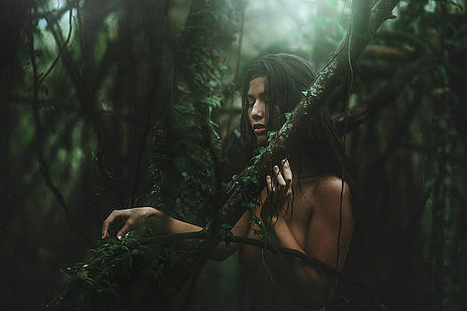 The Woods by TJ Drysdale